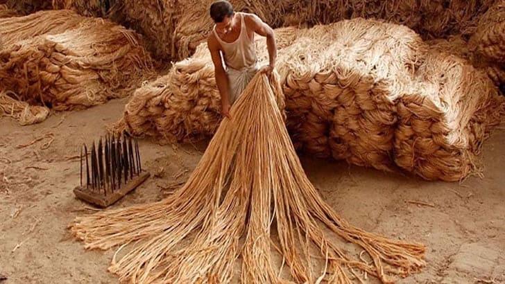 ন্যায্য মূল্য থেকে বঞ্চিত হচ্ছে ঠাকুরগাঁওয়ের পাট চাষীরা